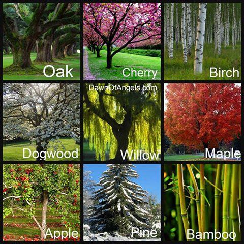 boho-tree